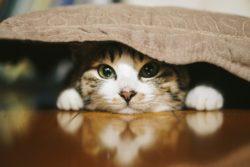 【ペットと防災3】ペットと避難生活|飼育者が被災した時の、いくつもある避難の選択肢と必要な条件を知っておこう